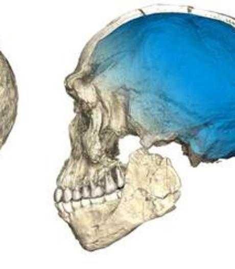 Homo sapiens ruim 100.000 jaar ouder dan gedacht