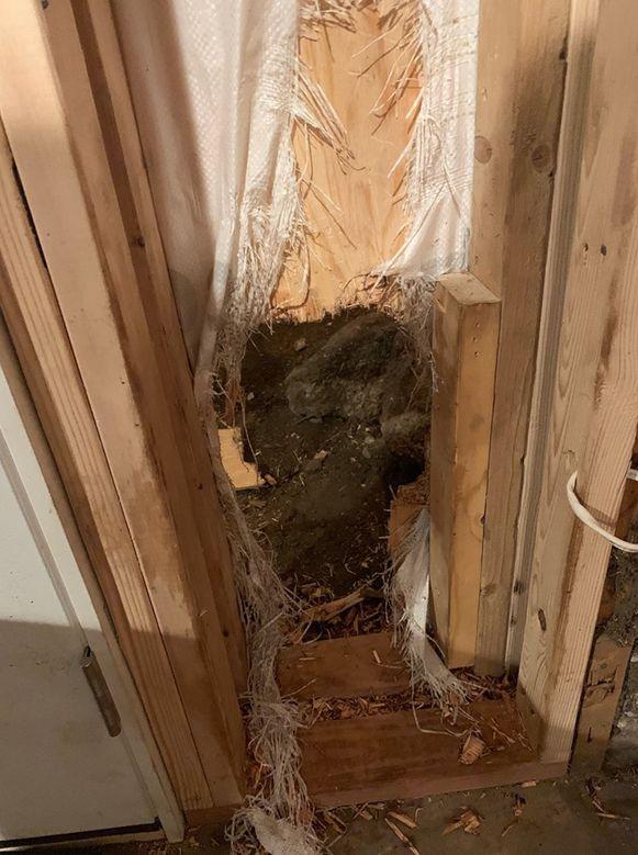 De beer maakte een gat in de muur om te ontkomen.
