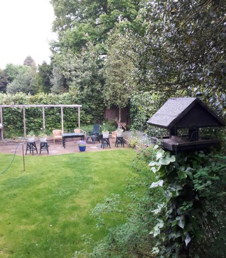 Brutale 'indringer' neemt bezit van achtertuin in Almelo