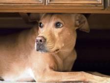 Vrouw uit Eerbeek krijgt werkstraf voor verwaarlozing honden