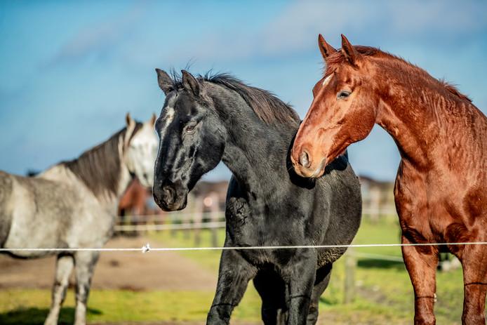 Paarden. Foto ter illustratie.