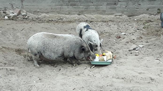 Betsie en Big vonden de taart lekker.