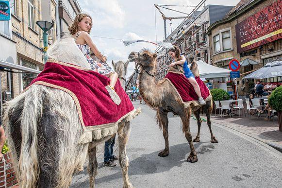 De kamelen hadden veel bekijks.