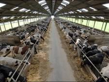 Besluit over megastal voor bijna 500  koeien in Ellecom maand later