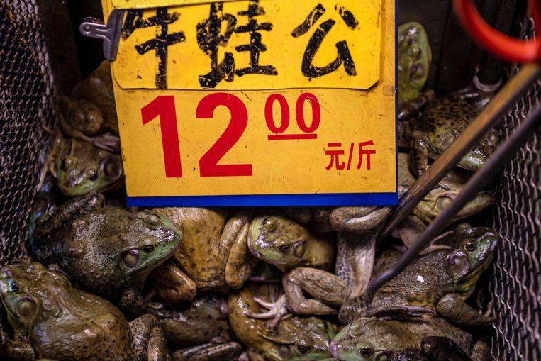 Kikkers te koop in een wildlife-markt in China. Beeld Alex Plavevski/EPA