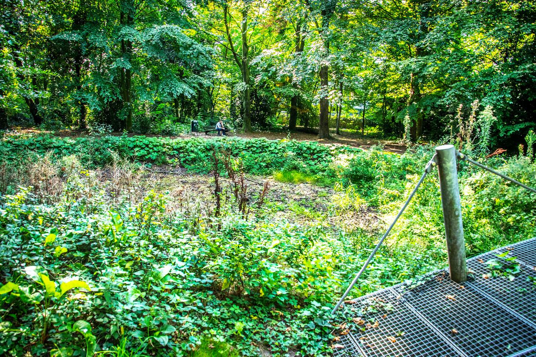 De verwaarloosde en overwoekerde vijver in het stadspark aan de Oude Dijk.