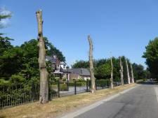Gemondenaar moet dokken voor bomen in Broekstraat