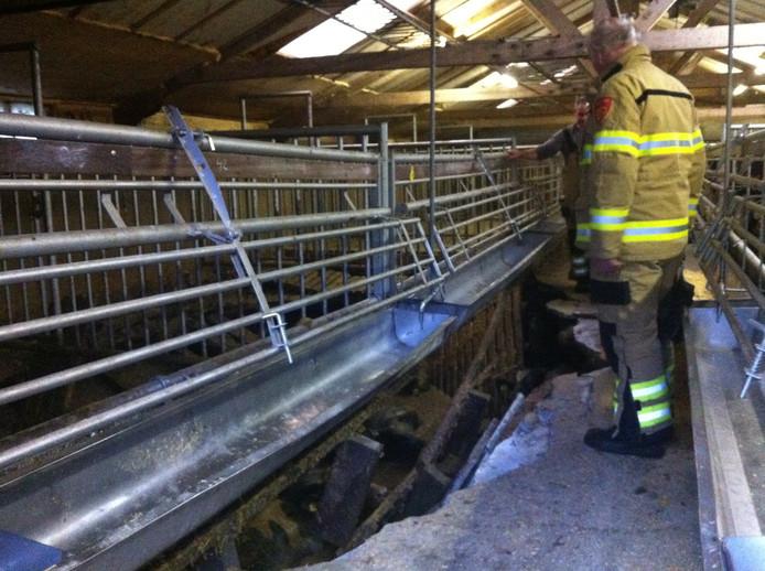 De ingestorte betonnen vloer op een boerderij in Bennekom. Foto: DG