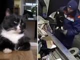 Dierenbeul geeft kat Kite mee met vuilniskar. Als bij wonder overleeft ze