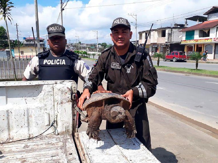 Een schildpad gered in Ecuador.