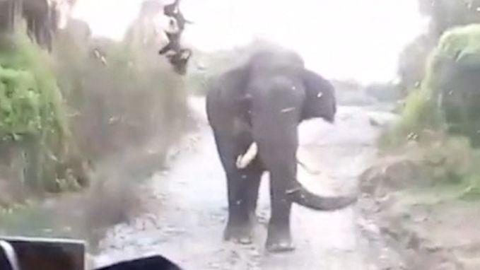 Kwade olifant wil niet wijken voor toeristenbus in Nepal