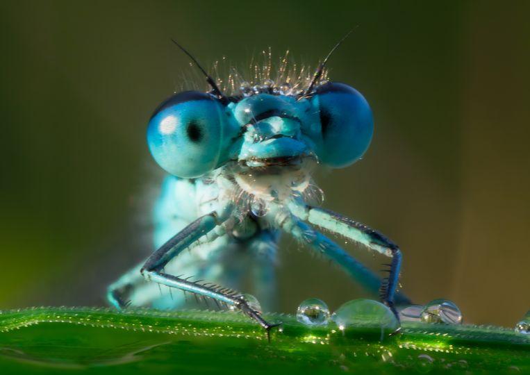 Omdat het systeem doet denken aan de facetogen van een insect, werd het Dragonfly ('libelle') genoemd. Beeld Getty
