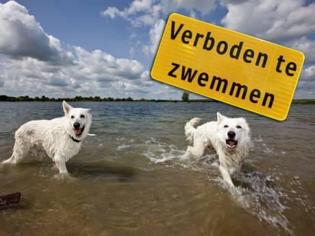 Nooit meer zwemmen in Nedereindse Plas in Utrecht, water is te smerig