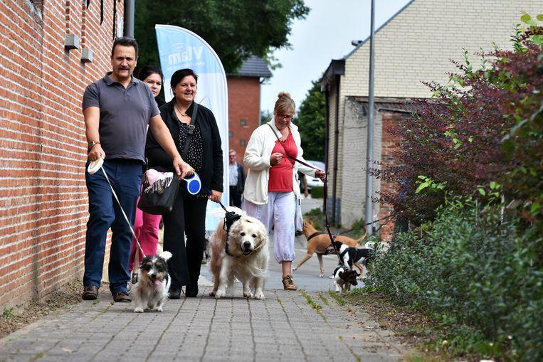 Illustratiebeeld hondenwandeling. De Rondoenk Feesten in Ramsdonk worden grotendeels afgelast, maar met de viervoeters kan er wel nog gewandeld worden op zondag.