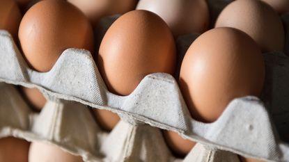 FAVV blokkeert leghennenbedrijf, eieren met pcb uit handel genomen