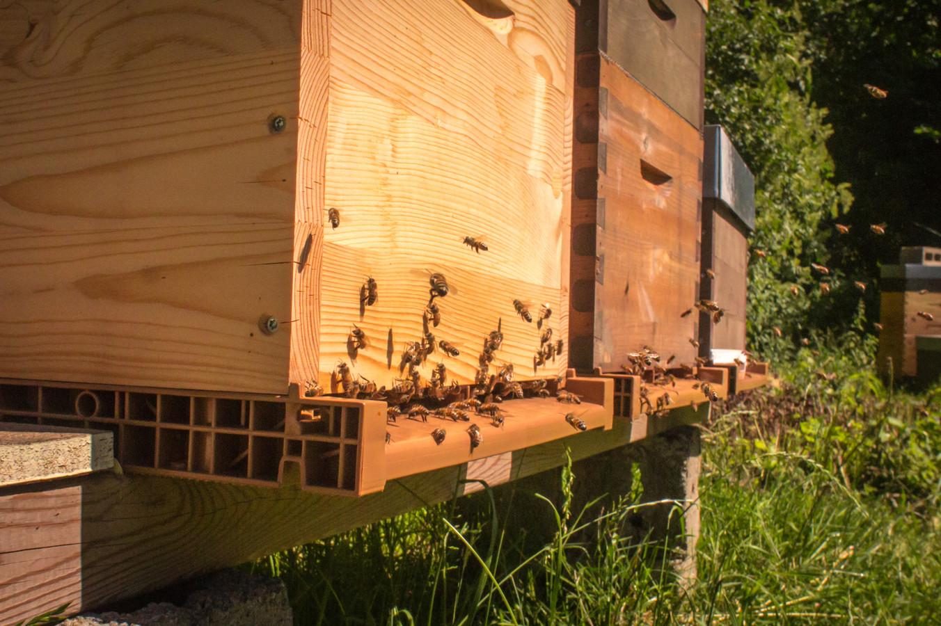 Les abeilles aident à la pollinisation des arbres du verger à haute valeur biologique.