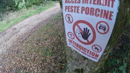 """Bossen in Luxemburg morgen weer open na varkenspest, Boerenbond vindt beslissing """"onverantwoord en onbegrijpelijk"""""""