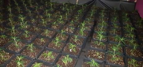 250 planten gevonden in pand aan Oranjeplein in Rijen, stroom illegaal afgetapt