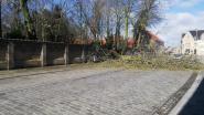 Boom valt om op Dorpsplaats in Reninge