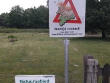 Berg en Dal plaatst waarschuwingsborden vanwege eikenprocessierups