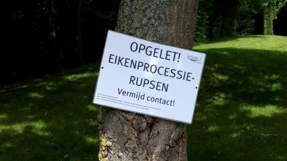 Gemeente waarschuwt met bordjes voor eikenprocessierupsen