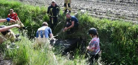 Enschedese amazone met schrik vrij als paard in de sloot valt: 'Dit maakt me boos'