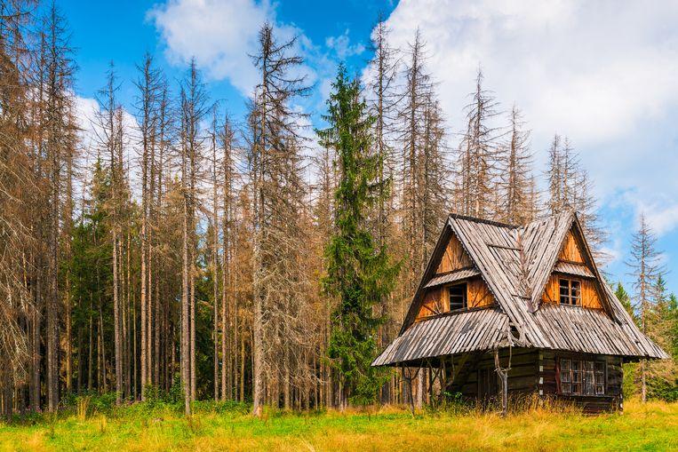 Een vakantiehuisje in Polen. Beeld Getty Images/iStockphoto