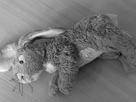 Tielenaar (51) gaf 4-jarige knuffelkonijn met foto van zijn penis: 'Van je lieve peetoom'