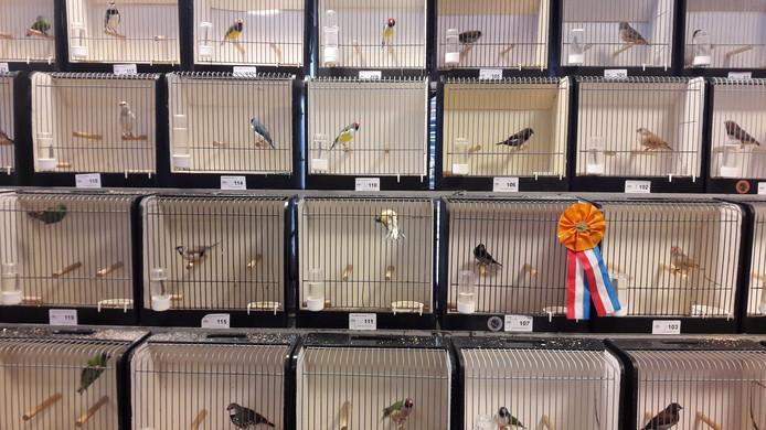 Vogeltentoonstelling bij Kanaria in Ede.