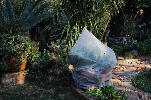 Wie al jonge plantjes in de tuin heeft gezet, doet er goed aan die later in de week af te dekken tegen nachtvorst.