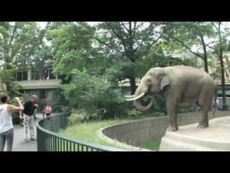 Olifant zet zoobezoeker te kakken