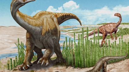 Nieuwe dinosoort komt aan het licht na opgraving van 66 jaar geleden