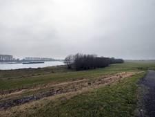 Kwartelkoning moet haven in Spijk tegenhouden