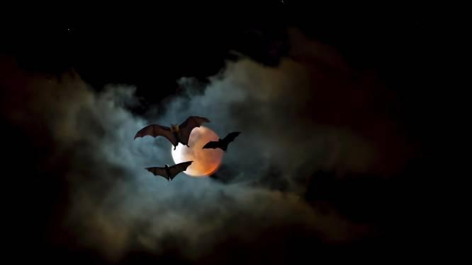 Ook vleermuizen houden zich aan de afstandsregel (als ze ziek zijn)