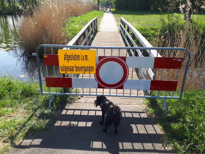 Het voetpad langs de grote vijver aan de noordkant van de wijk Ussen is tijdelijk afgesloten vanwege de ondermijnende activiteiten van een bever.