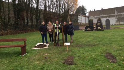 Burgemeester en schepenen planten bijzondere boom op kerkhof in Wortegem