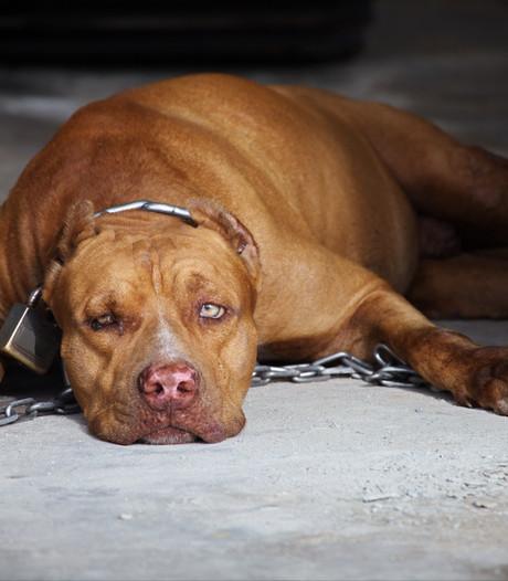 Illegale hondenvechters voor tweede keer in kraag gegrepen