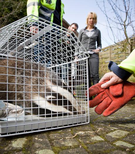 Maximale werkstraf geëist tegen oprichter dierenambulance Doetinchem-Winterswijk