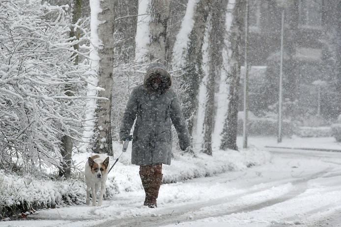 Voor menig viervoeter is het heerlijk vertoeven in de sneeuw