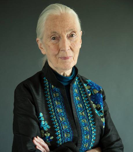 Jane Goodall: De wereld is in een beangstigend slechte staat