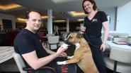 IJssalon lanceert Blafijs voor honden