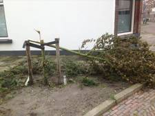 Boompjes in Vlissingse Rooie Buurt vernield