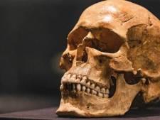 Unieke Zweedse Vikingschedel komt naar Fries Museum