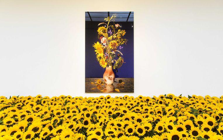 Zonnebloemen in het Museum Jan van der Togt. De bloemen verwijzen naar de rampplek in Oekraïne waar vlucht MH17 op 17 juli 2014 neerstortte. Rondom de plek waren immense velden vol zonnebloemen. Beeld anp