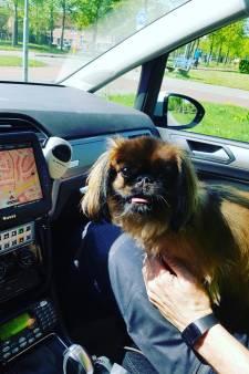 Deze hond was achtergelaten in snikhete auto en mag afkoelen in politiewagen