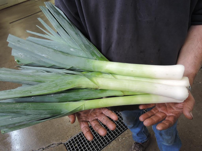Van plantje tot gezonde onbeschadigde prei, een heel karwei