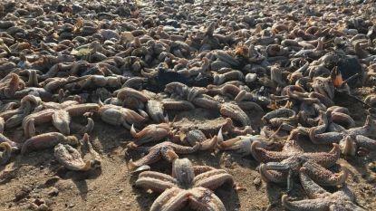 Starmageddon: duizenden zeesterren spoelen aan in Kent