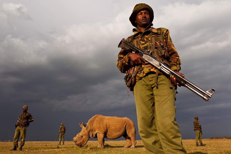Neushoorn Sudan temidden van zijn bewakers. Deze foto zette documentairemaakster Floor van der Meulen aan tot het maken van 'The Last Male on Earth'.
