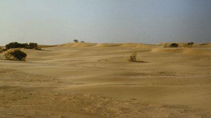 """""""Westhoekreservaat moet opnieuw Sahara van De Panne worden"""": ANB verwijdert alle groen"""