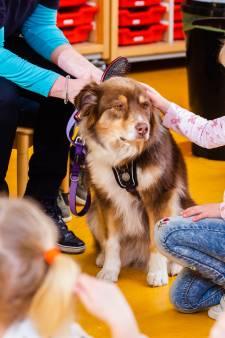 Kleuters krijgen aailes om hondenbeten te voorkomen